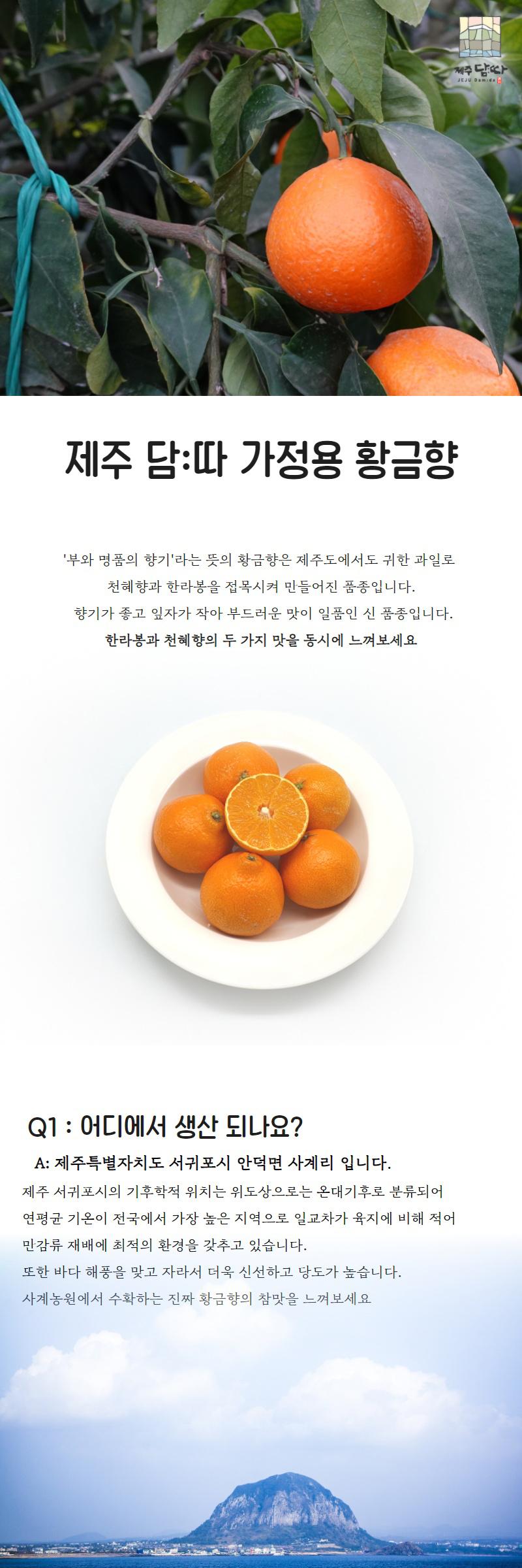황금향-데마시안_01.jpg